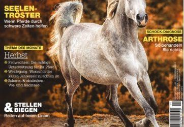 """2017 Mein Pferd """"Hilfe ich habe Angst"""""""